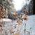 tél · hosszú · Finnország · Skandinávia · fény · levelek - stock fotó © taden