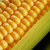 corn cob stock photo © taden