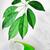 verde · sabão · orquídea · folhas - foto stock © taden
