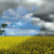 festmény · citromsárga · mező · ecset · virág · tavasz - stock fotó © taden