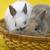 genç · tavşanlar · oturma · beyaz · tavşan · hayvan - stok fotoğraf © taden
