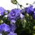 floreale · bella · primavera · abstract · natura · foglia - foto d'archivio © taden