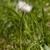 abelha · dandelion · vespa · flor · grama · verão - foto stock © taden