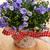 floral · hermosa · primavera · resumen · naturaleza · hoja - foto stock © taden