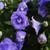 フローラル · 美しい · 春 · 抽象的な · 自然 · 葉 - ストックフォト © taden