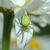 spin · buit · tuin · net · ogen · tijger - stockfoto © taden