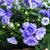синий · красоту · букет · ярко - Сток-фото © taden