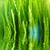 fresche · erba · erba · verde · gocce · d'acqua · acqua - foto d'archivio © taden