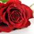Rood · rose · mooie · witte · liefde · natuur - stockfoto © taden