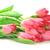 kırmızı · lale · buket · çok · çiçekler · doğa - stok fotoğraf © taden