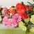 çiçekler · karanfil · buket · renkli · çiçek - stok fotoğraf © taden