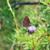 beautiful butterfly stock photo © taden