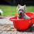 dog in  bathtub stock photo © taden