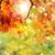 sümüksü · turuncu · maya · dışarı · ağaç - stok fotoğraf © taden