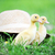 twee · pluizig · kuikens · groen · gras · gras · kind - stockfoto © taden
