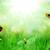 soleado · verde · campo · mariquitas · mariposa · flor - foto stock © taden