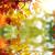 hermosa · colorido · hojas · de · otoño · parque · diseno · marco - foto stock © taden