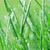 erba · verde · rugiada · natura · stagione · ambiente - foto d'archivio © taden