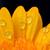 amarelo · margarida · isolado · branco · fundo - foto stock © taden