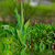 Rood · tulp · tuin · bloemen · voorjaar · liefde - stockfoto © taden