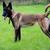 köpek · ay · eski · bahar · çim · yaz - stok fotoğraf © taden