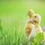 Pasen · kuikens · gras · weinig · hemel · bloem - stockfoto © taden