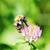 honingbij · water · natuur · groene · honing - stockfoto © taden