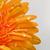 amarelo · flor · branco · natureza · folha - foto stock © taden
