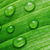 green leaf with water drops stock photo © taden