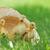 kicsi · zöld · fű · szabadtér · tavasz · fű · gyermek - stock fotó © taden