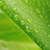 green plant leaf with water drops stock photo © taden