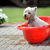 perro · bañera · mojado · bebé · proceso - foto stock © taden