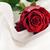 rosa · vermelha · branco · seda · isolado · luz · planta - foto stock © taden