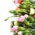 fiori · garofano · bouquet · colorato · fiore - foto d'archivio © taden