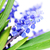 azul · primavera · flores · cabeça · planta - foto stock © taden