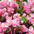 フルフレーム · 花 · 庭園 · 自然 · 背景 · 色 - ストックフォト © taden