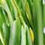 fide · bahar · çiçekleri · büyüyen · doğa · bitki · buket - stok fotoğraf © taden