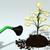 een · euro · geld · weinig · boom · munt - stockfoto © TaiChesco