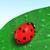 joaninha · folha · coberto · orvalho · vermelho - foto stock © TaiChesco
