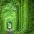 piękna · tunelu · drzew · zielone · tekstury · drzewo - zdjęcia stock © taiga