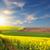 Geel · bloei · velden · grond · weg · vallei - stockfoto © taiga