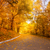 gold autumn in the city park   yellow trees and alley stock photo © taiga