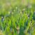 паутина · покрытый · роса · капли · луговой · Солнечный - Сток-фото © taiga