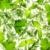 ramoscello · fresche · basilico · isolato · bianco · alimentare - foto d'archivio © taiga