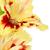 beautiful colorful gladiolus isolated stock photo © taiga