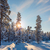 winter snowy landscape with sun and snow covered trees stock photo © taiga