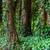 korka · drzew · Portugalia · lasu · drewna · charakter - zdjęcia stock © taiga