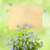 wood sign with flowers empty board for your text on light g stock photo © taiga