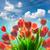 тюльпаны · Blue · Sky · Purple · желтый · копия · пространства - Сток-фото © taiga