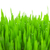 fresh green wheat grass with drops and bokeh isolated stock photo © taiga